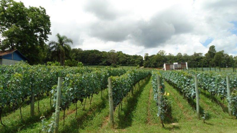 Turismo rural e Ecoturismo