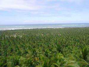 Praia do Gunga AL ( foto Evandro Marques - site www.passeios.org)