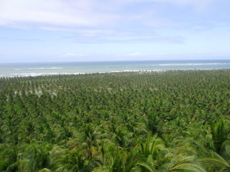 Praias de Maceió AL - Praia do Gunga