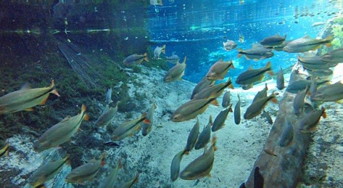 Aquario Encantado (foto fonte http://www.interativapantanal.com.br/especiais/especiais_detalhes.asp?id=877)