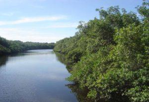 Parque Florestal Rio da Onça (foto https://www.sescpr.com.br/caioba/guia-turistico/atrativos-ecologicos/parque-florestal-rio-da-onca/)