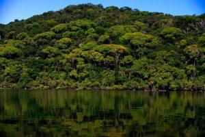 Parque Nacional do Superagui (foto https://marsemfim.com.br/parque-nacional-superagui-parana/)
