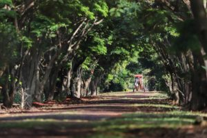 Itaipulândia (foto http://www.viajeparana.com/Itaipulandia)